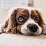 pelechy pro psy